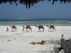 Camel riding at the Mombasa coast