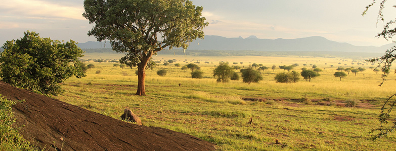 National Parks in Uganda